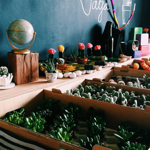 Fresh Cacti and Succulents