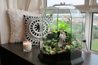 Self-sustaining terrarium