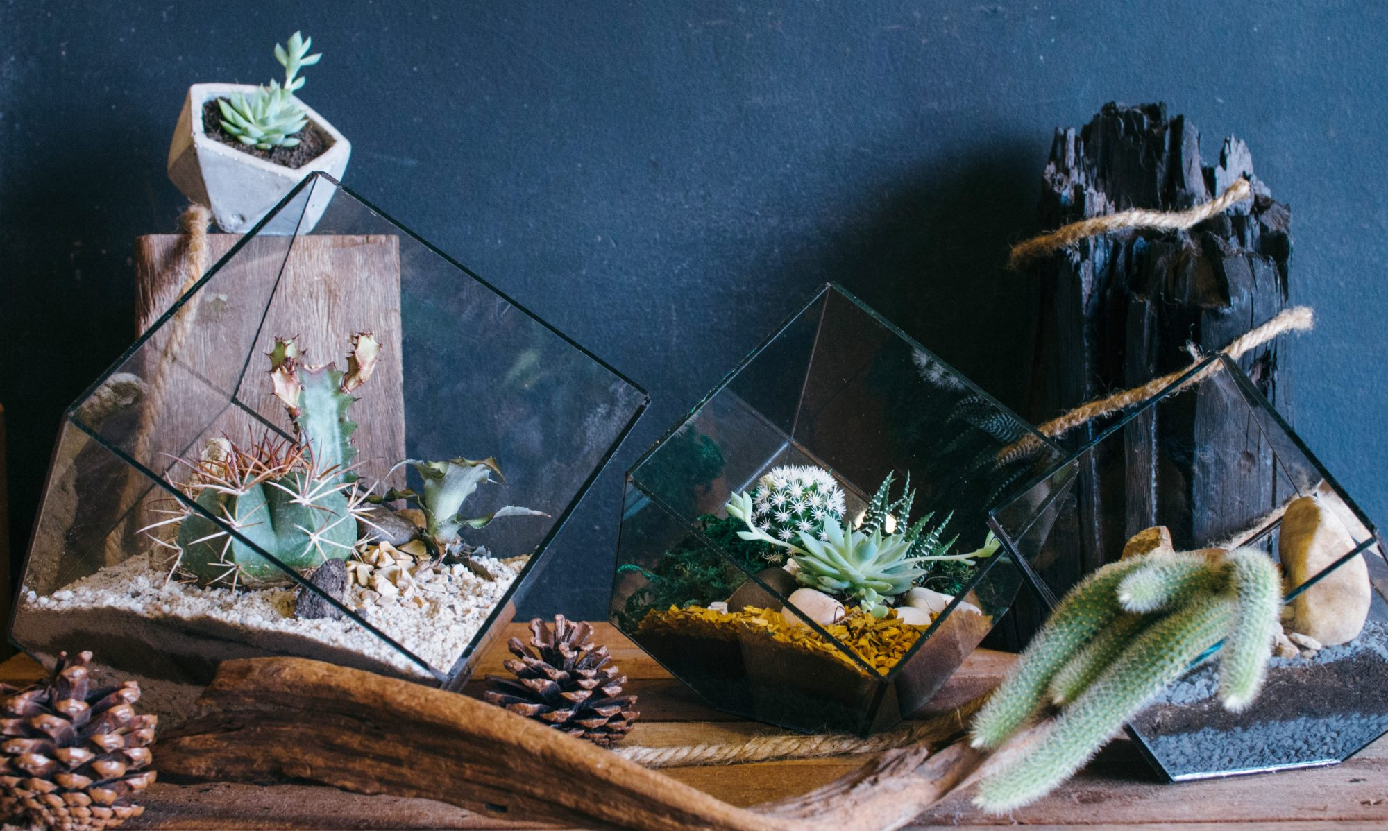 Tiny Forest terrariums